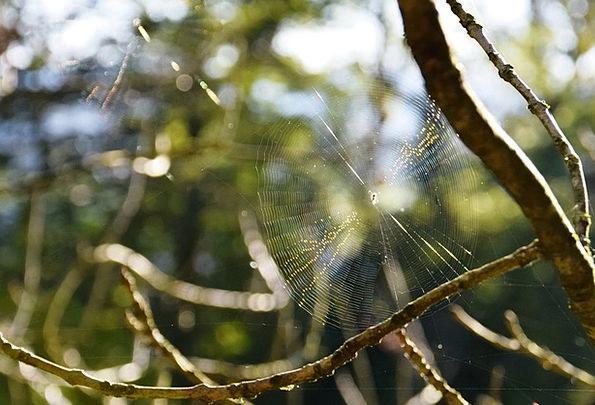 Cobweb Landscapes Fall Nature Spider Autumn Back L