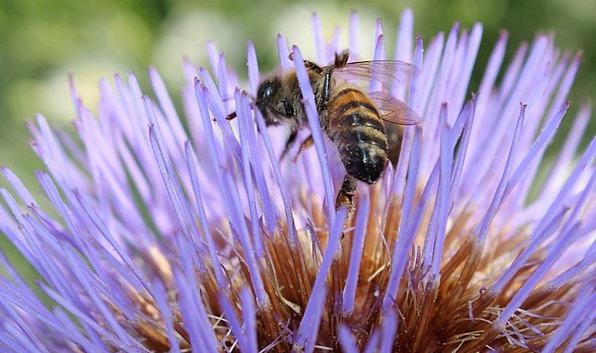 Flower Floret Elaborate Bee Purple