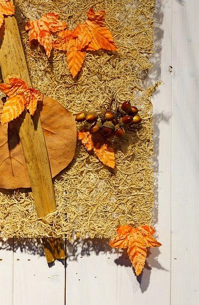 Acorn Landscapes Nature Autumn Acorns Nature Brown