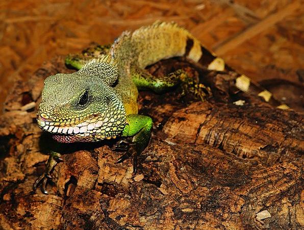 Lizard Scale Gauge Reptile Terrarium Urtier Dry Ho