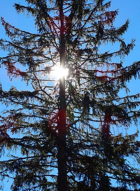 Fir Landscapes Long Nature Back Light Taillight Pi
