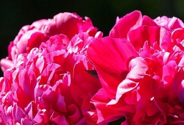 Pentecost Landscapes Nature Flower Floret Peony Na