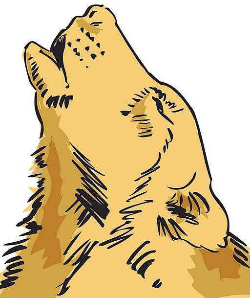 Head Skull Casanova Loud Lurid Wolf Animal Physica