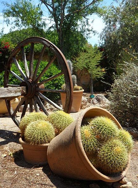 Garden Plot Picturesque Attractive Cactus Wooden W