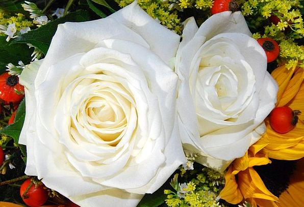 Rosa Snowy Flower Floret White Charm Attraction Bl