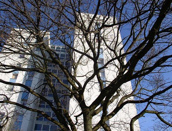 Tree Sapling Twigs Skyscraper Tower Branches Sky B