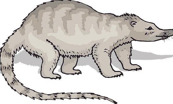Gray Leaden Physical Tail End Animal Fur Hair Free