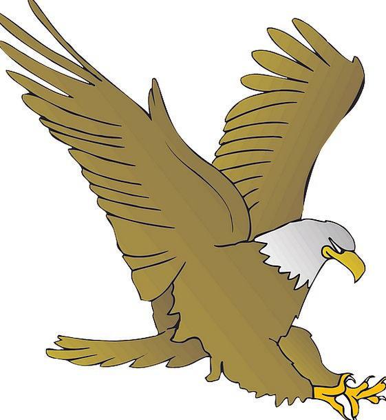 Eagle Physical Beak Bill Animal Freedom Bird Fowl