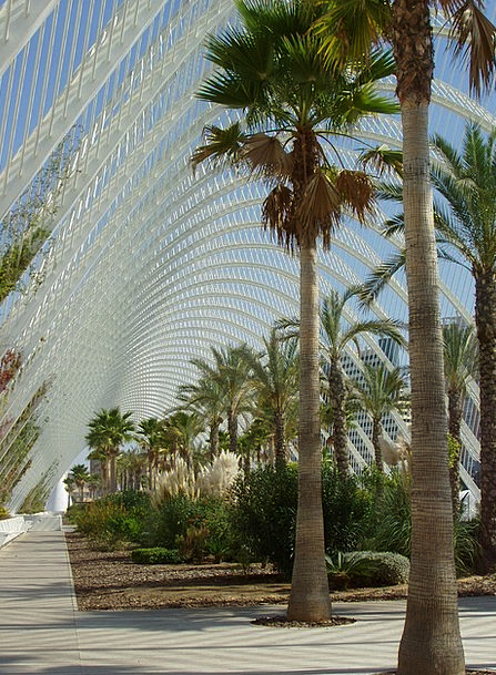 Mexico Buildings Tributes Architecture Palm Trees