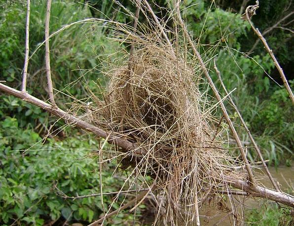 Birds Natures Landscapes Shells Nature Bird'S Nest