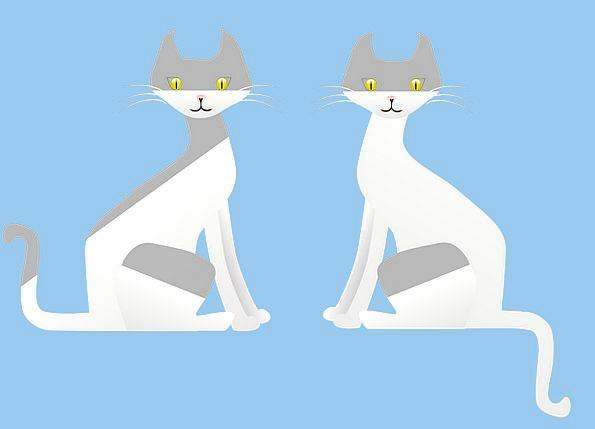 Cats Felines Faunae Two Binary Animals White Snowy