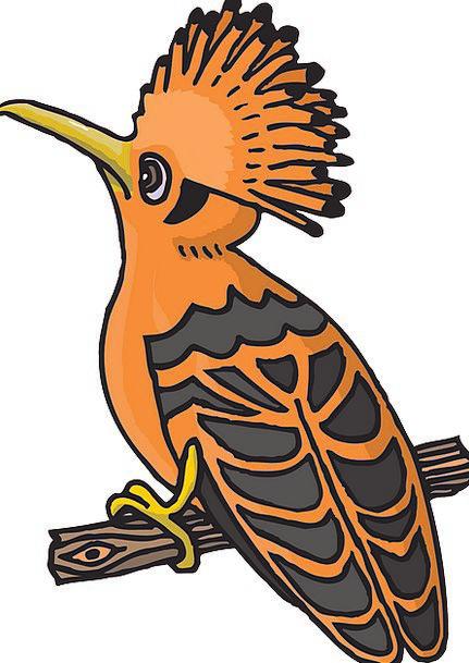 Black Dark Carroty Bird Fowl Orange Branch Divisio