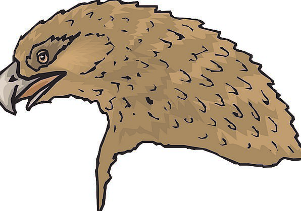 Head Skull Chocolate Eagle Brown Bird Fowl Beak Fe