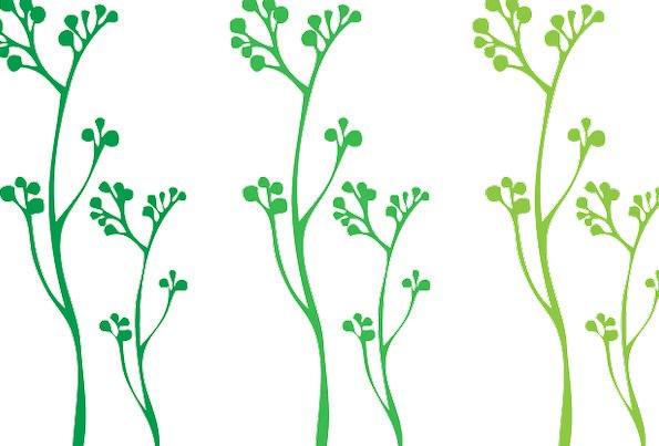 Plants Florae Lime Stems Stalks Green White Backgr