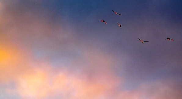 Cloud Mist Hue Birds Natures Color Flight Aeronaut