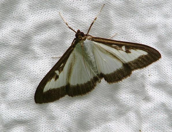 Butterfly Snowy Black Dark White Fabric Cloth Prob