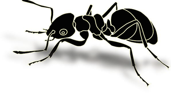 Ant Bug Hardworking Careful Insect Busy Full Hymen