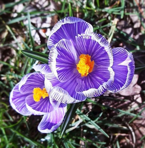 Flower Floret Elaborate Fragrance Cologne Purple G