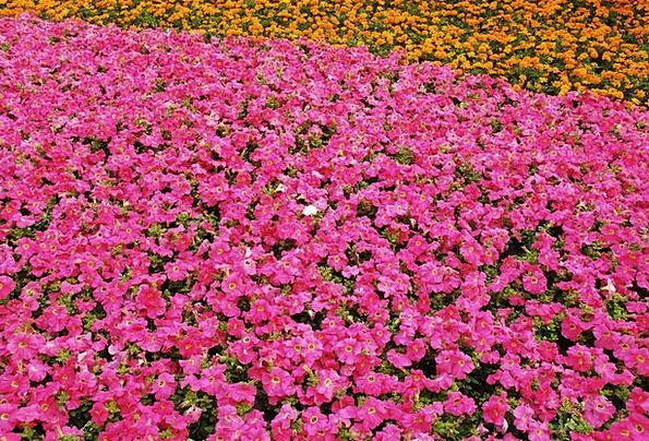Flowers Plants Landscapes Flushed Nature Orange Ca