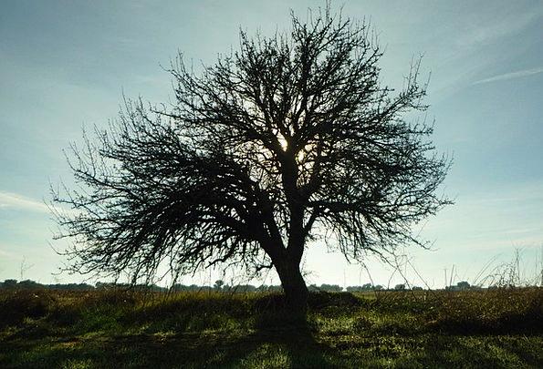 Tree Sapling Landscapes Outline Nature Landscape S