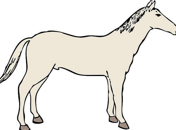 Horse, Mount, Stallion, Mustang, Mammal, Creature, Racehorse, Farm