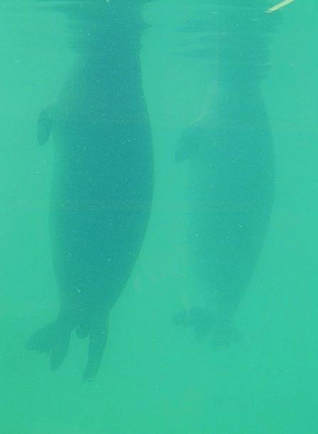 Seal Closure Robbe Phoca Vitulina Green Aquarium M