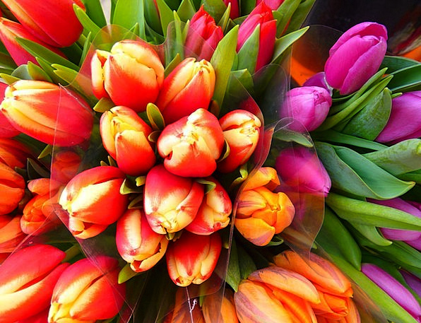 Tulips Coil Colorful Interesting Spring Bouquet Bu