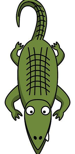 Alligator Landscapes Nature Crocodile Line Reptile