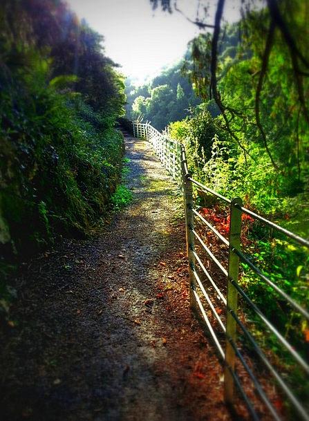 Pathway Trail Landscapes Fences Nature Trees Plant