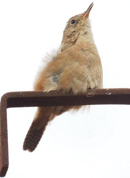 Sparrow Landscapes Nature Nature Countryside Birdi