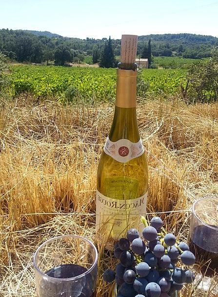 Wine Mauve Summer Straw-hat Grapes Vine Creeper Fr