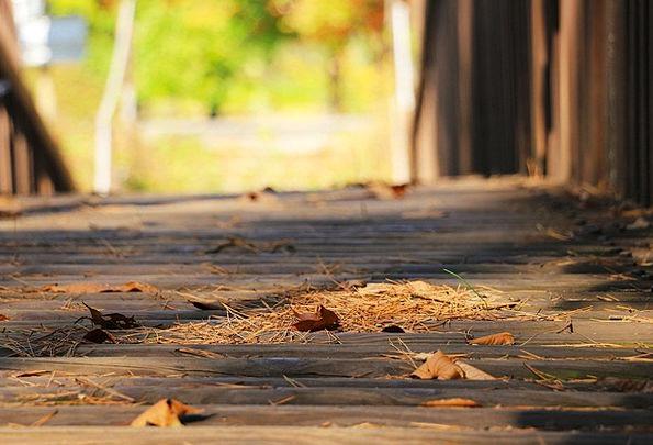 Bridge Bond Fall Autumn Leaves Autumn Leaves Green