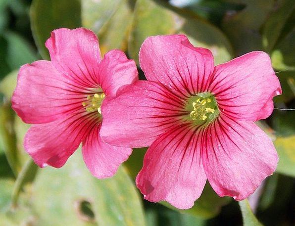 Flower Floret Landscapes Coil Nature Nature Countr