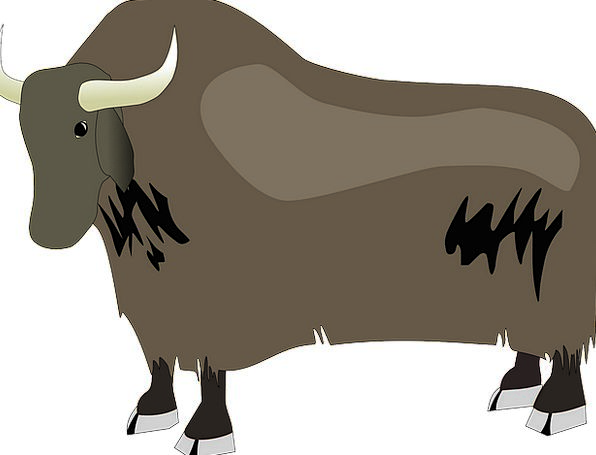 Bison Steer Yak Chat Ox Hoofed Animal Physical Pow