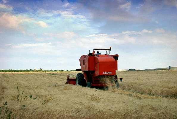 Agriculture Farming Craft Industry Wheat Puglia Wo