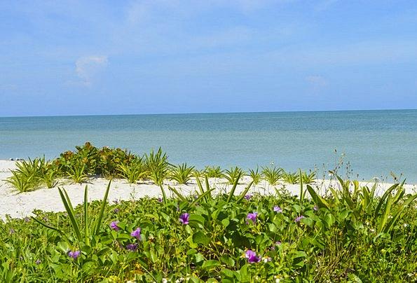 Mexico Vacation Travel Celestun Yucatan Palms Beac
