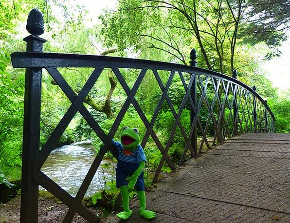 Bridge Bond Landscapes Nature Frog Kermit Crossing