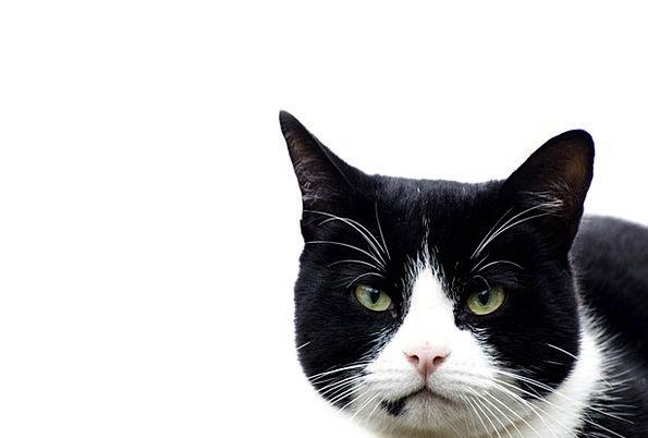 Cat Feline Gymnastic Balancing Complementary Acrob