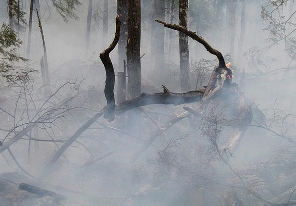 Forest Fire Landscapes Passion Nature Hot Warm Fir