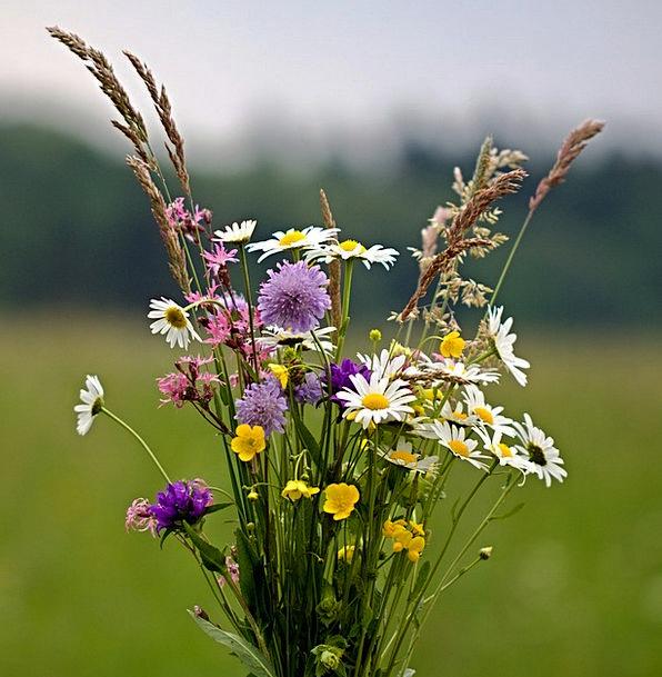 Flowers Plants Landscapes Bunch Nature Wild Flower