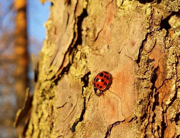Ladybug Landscapes Nature Ladybird Lady Beetle Bee