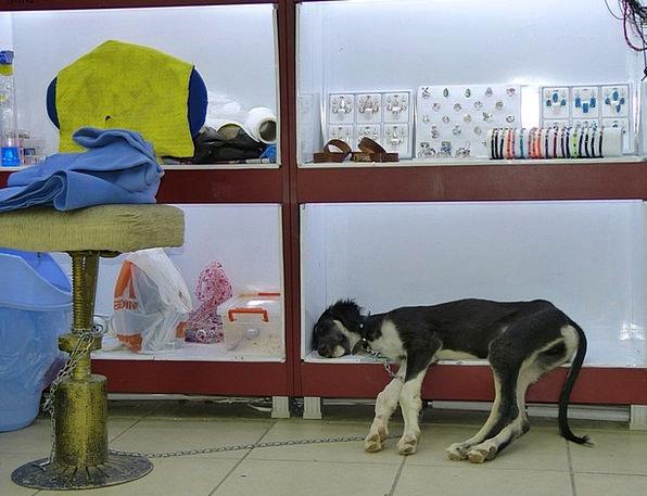 Dog Canine Slumber Animal Physical Sleep Shelf Led