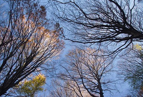 Trees Plants Landscapes Scenery Nature Tree Saplin