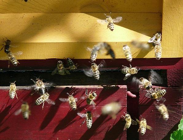 Honey Bees Hive Store Bee Beehive Honey Darling In