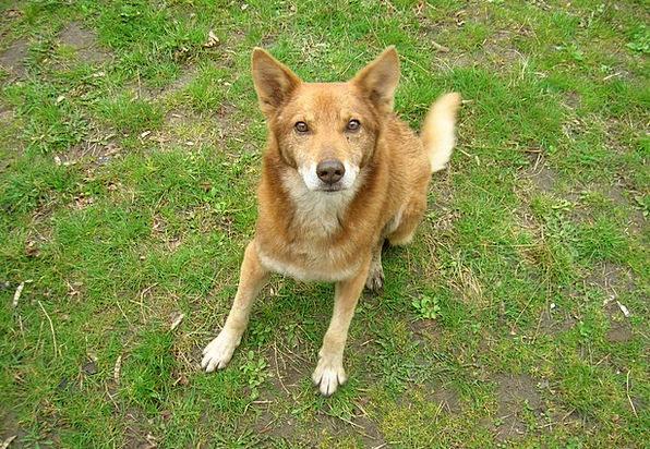 Dog Canine Animals Man'S Best Friend Pets Pet Dome