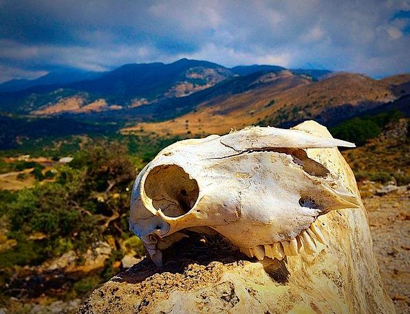 Skull Mind Physical Skull Bone Animal Landscape Bo