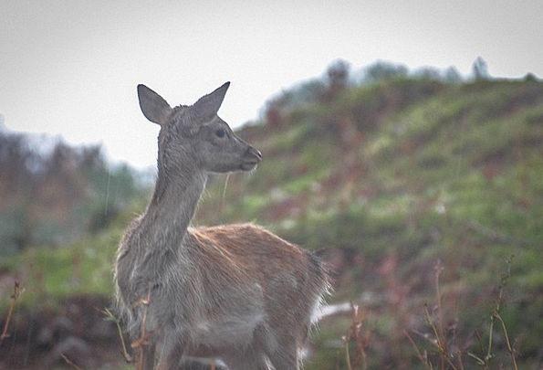 Deer Physical Nature Countryside Animal Fauna Wild