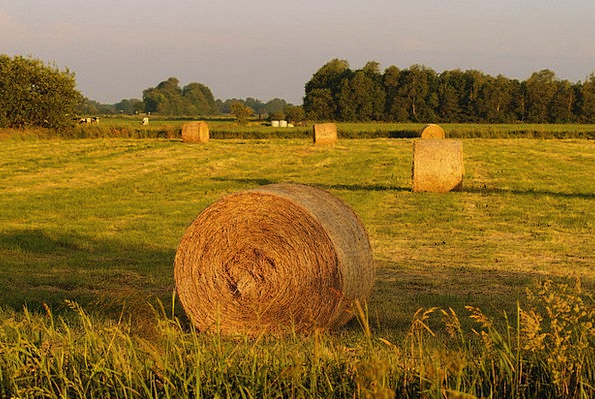 Meadow Field Vacation Travel Hay Straw Round Bales