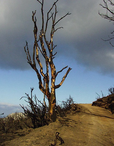 Tree Sapling Landscapes Scorched Nature Landscape