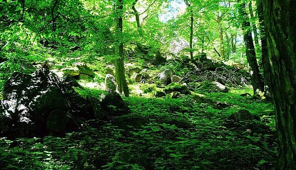 Trees Plants Textures Sapling Backgrounds Vegetati